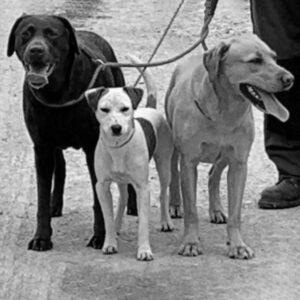 MeetTeam Dogs