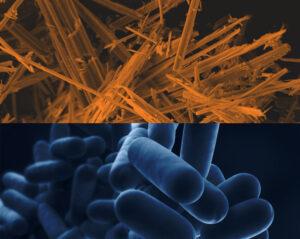 asbestos and legionella bundle