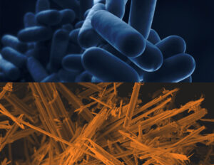 asbestos and legionella compliance issues